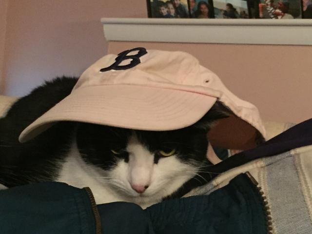 BostonCat