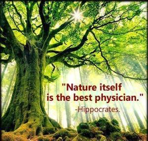 hippocrates_nature